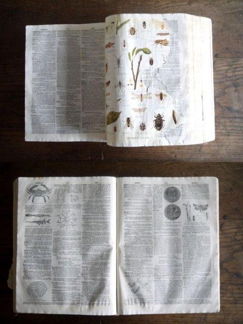 他の写真3: アンティーク 洋書